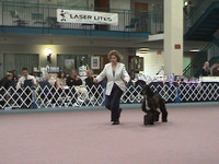 041008 Greater Twin Cities Afghan Hound Club Specialty