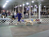 040207 Central Indiana Kennel Club