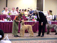 040417 Afghan Hound Club of Greater Columbus Specialty