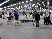 040312 Louisville Kennel Club